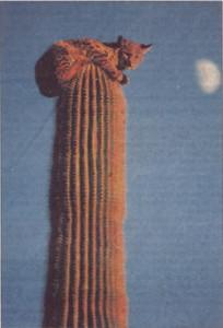 Cat on cactus