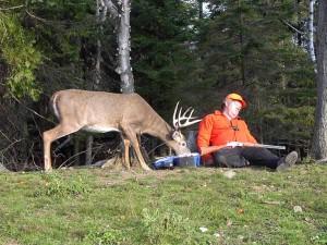 Deer and Hunter